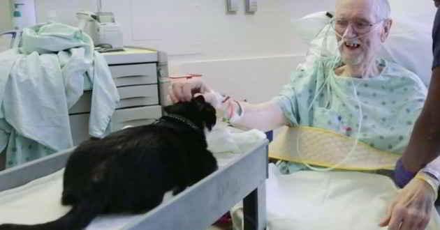 Duke le chat qui apporte du réconfort aux patients
