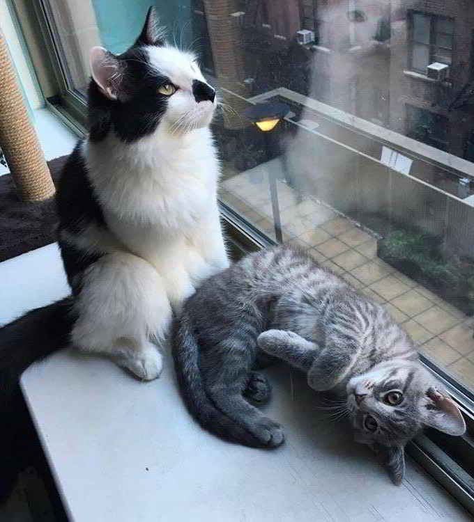 Louie et Zoe