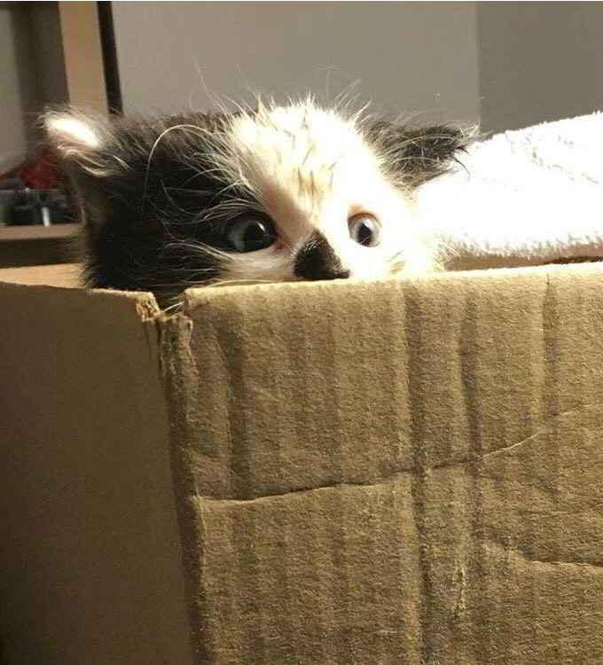 Louie le chaton