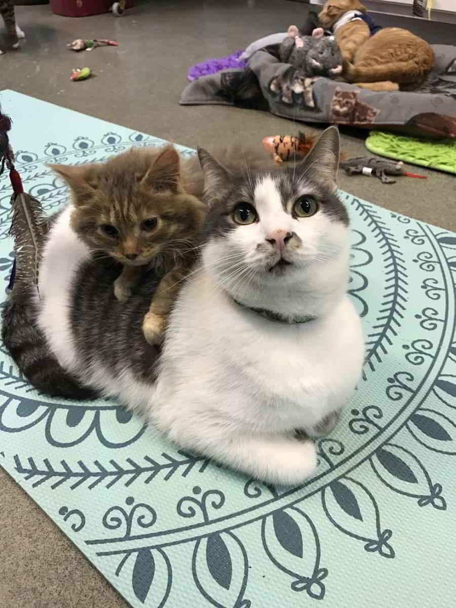 Derecho devenu un beau chat !