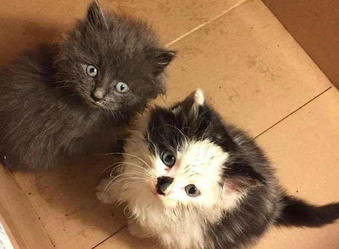 Les deux chatons