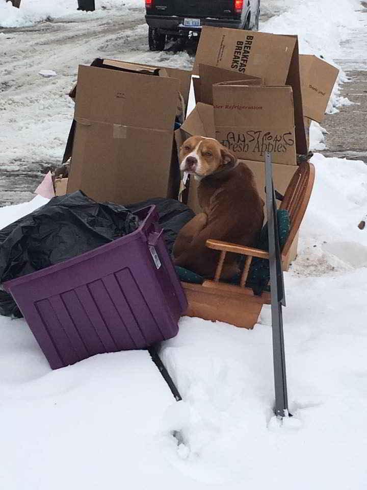 Le Pitbull jeté aux ordures