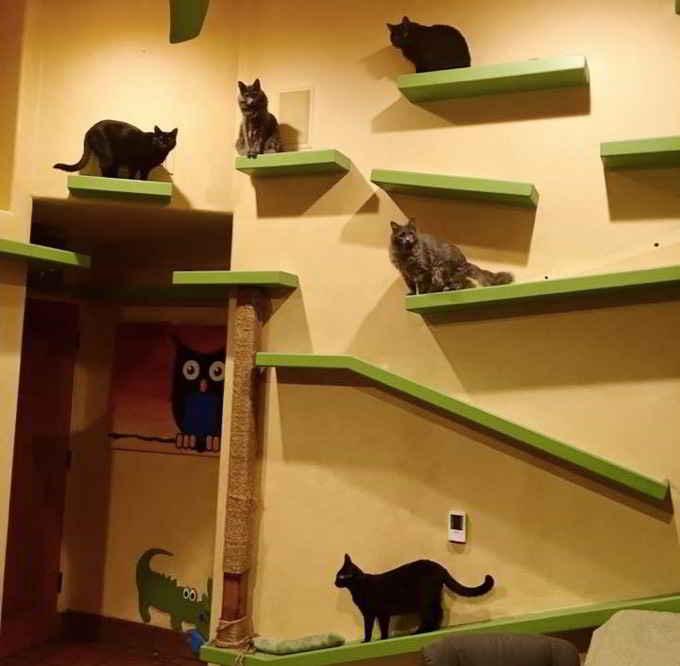 Peter Cohen et le paradis des chats
