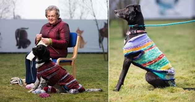 Des chiens noirs avec des pulls