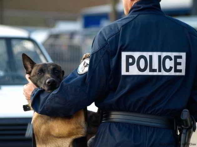 Un chien policier de la brigade cynophile