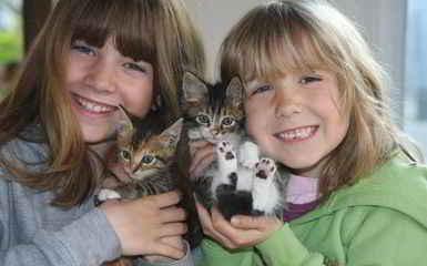 Des chatons adoptés à la SPA