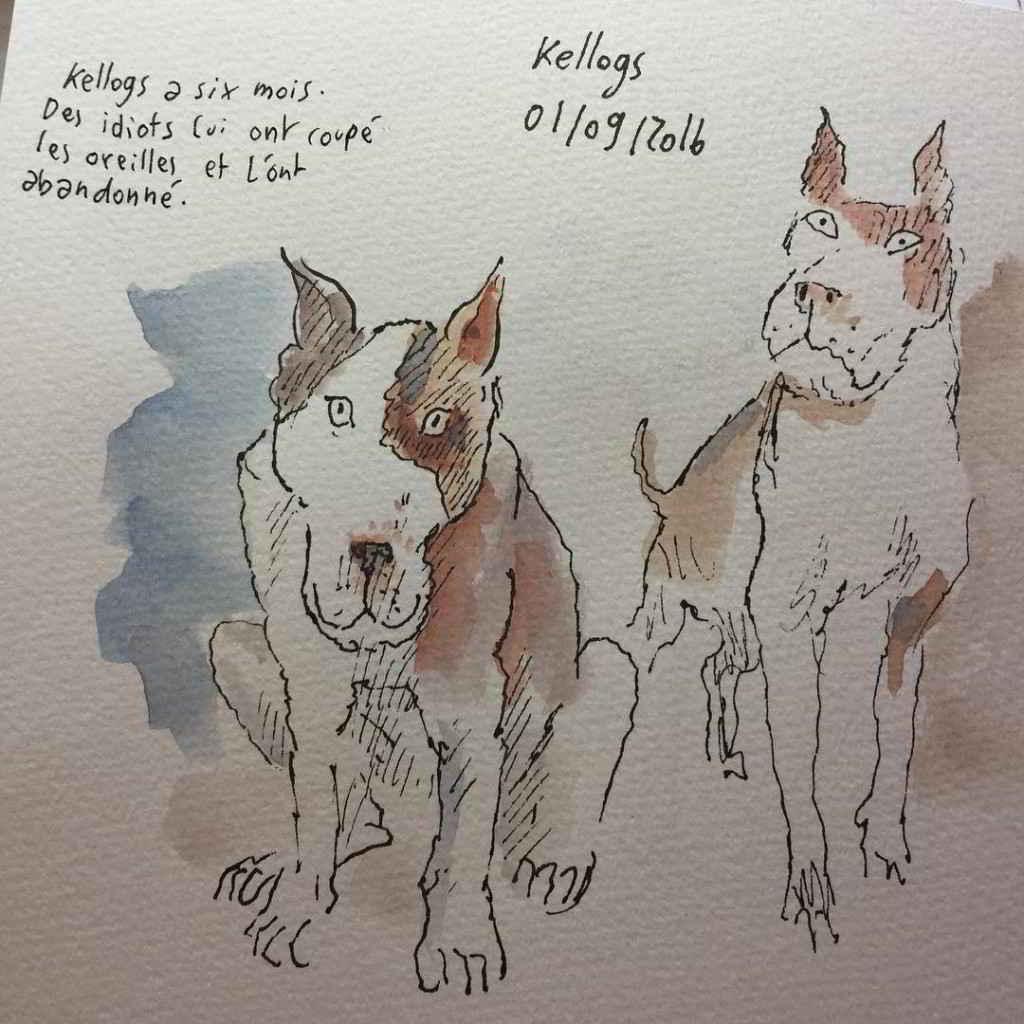 Les chiens de la SPA de Joann Sfar