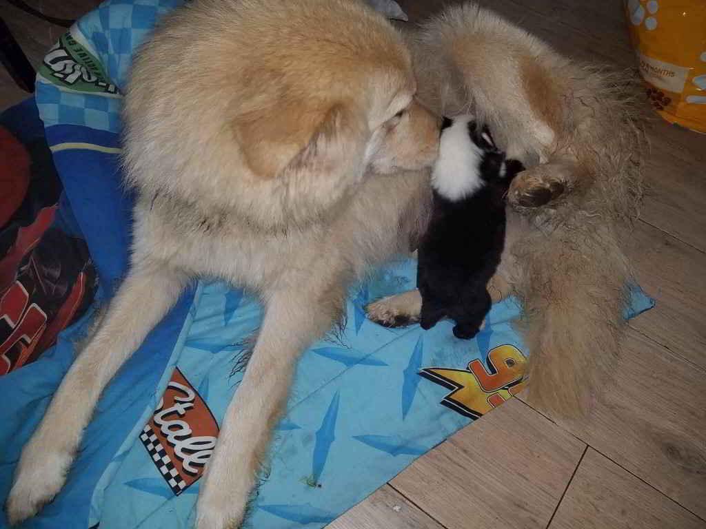 La chienne Daisy et les chiots