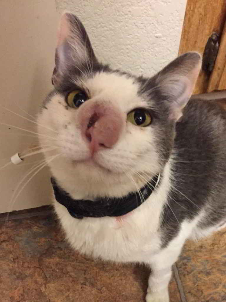 Le chat Skimble Skypaws