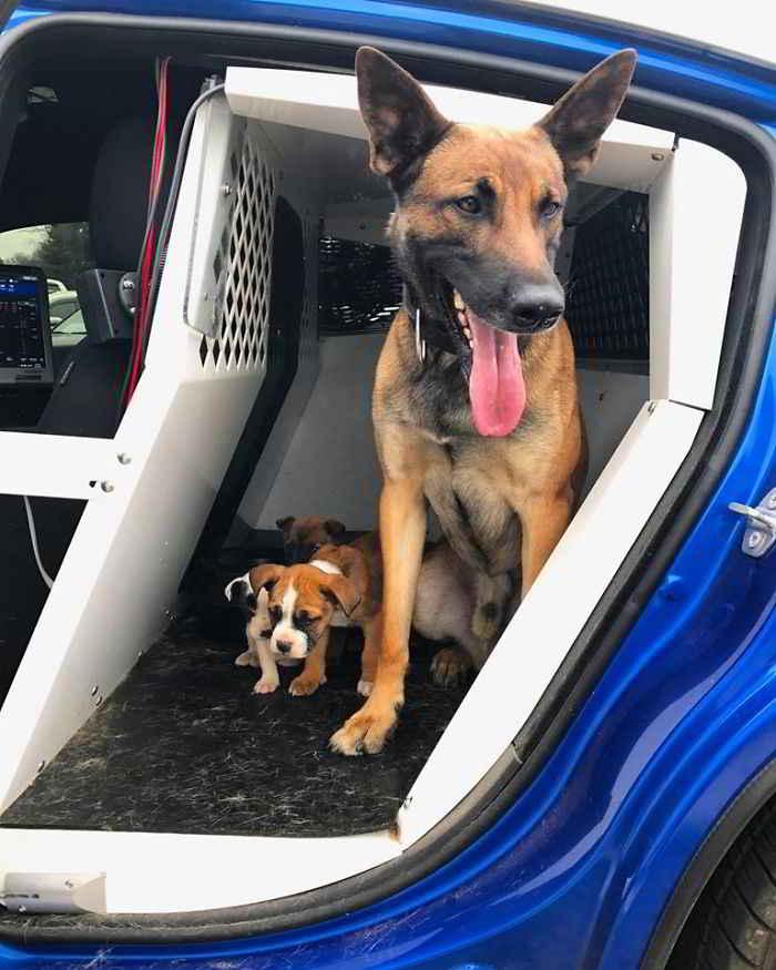 Tek le chien policier et les chiots