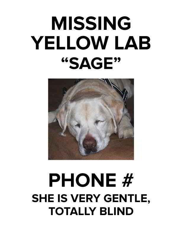 Sage la chienne aveugle