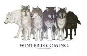 Les loups de la famille stark