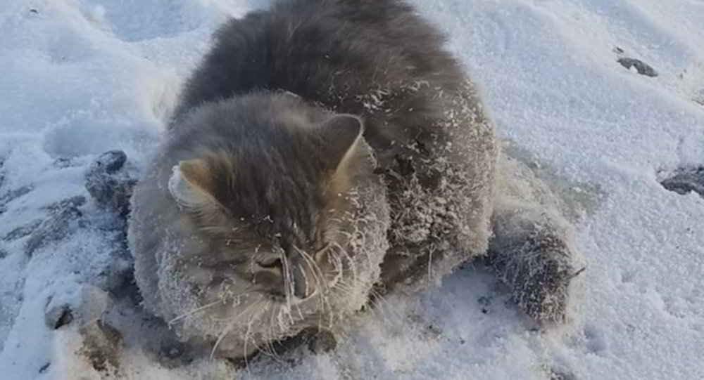 Nika le chat prisonnier de la glace