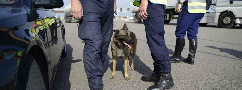 Chien policier (image d'illustration)