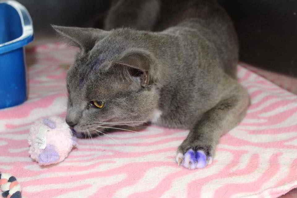 Purple Paws le chat
