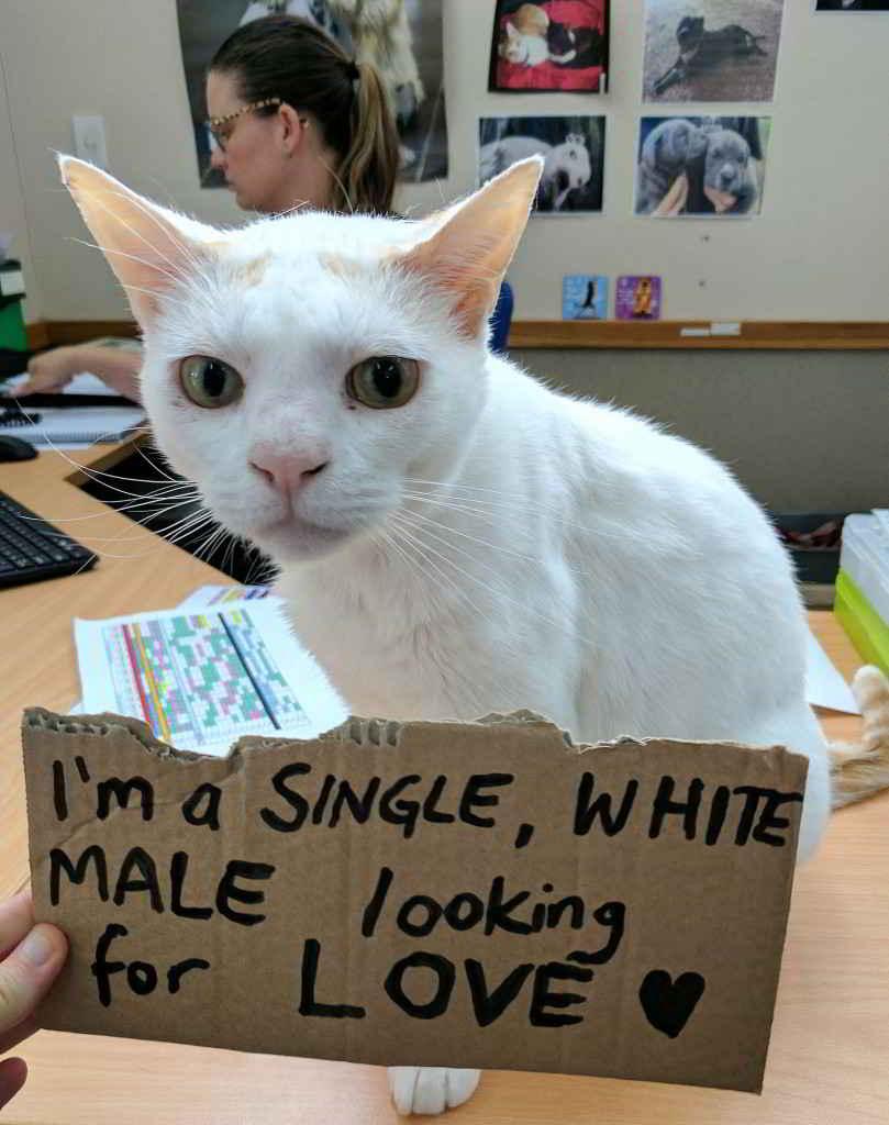 Champas le chat blanc