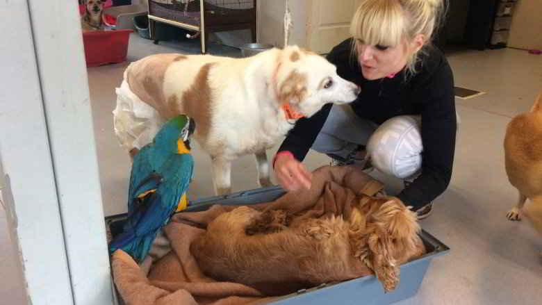 Stéphanie et les chiens / Photo Suzi Handicap Animal