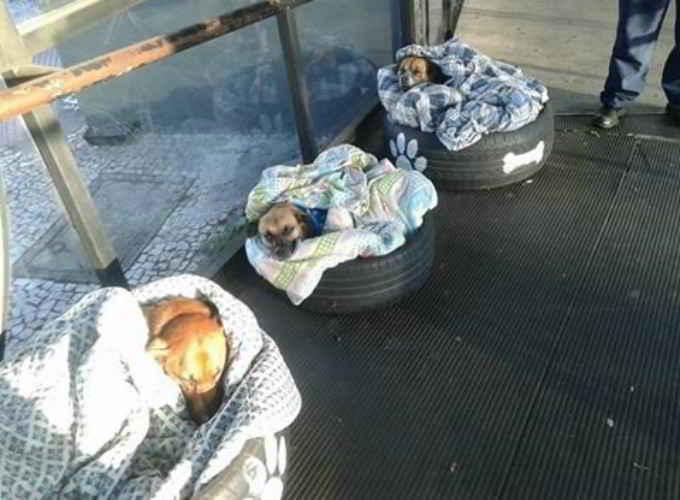 Les chiens dans leurs paniers