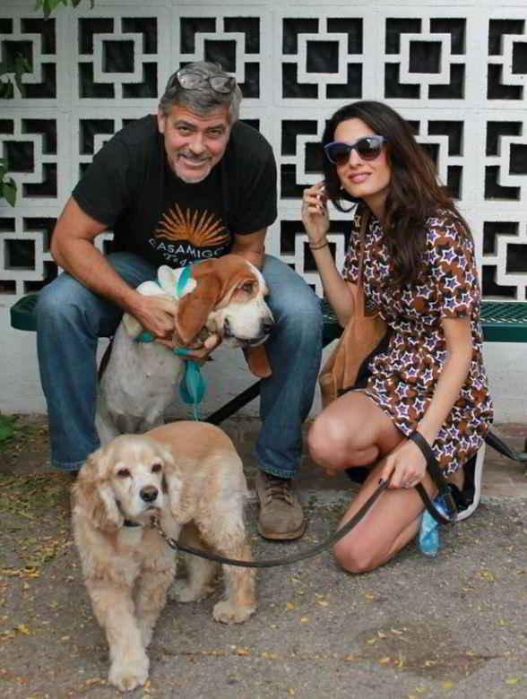 George et Amal Clooney et leurs chiens