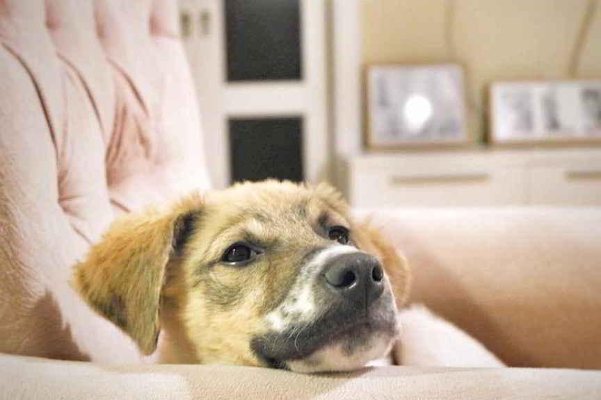 Pascal le petit chien est adopté