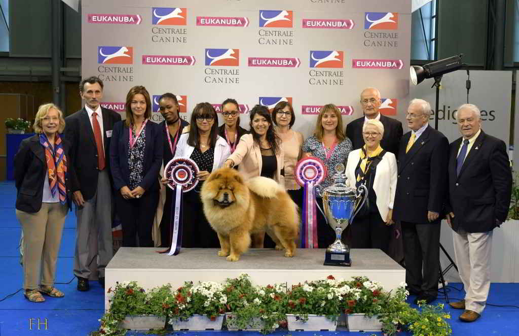 Championnat de France des Chiens de race / Photo SCC