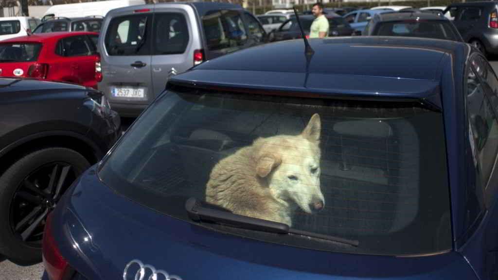 chien enfermé dans une voiture