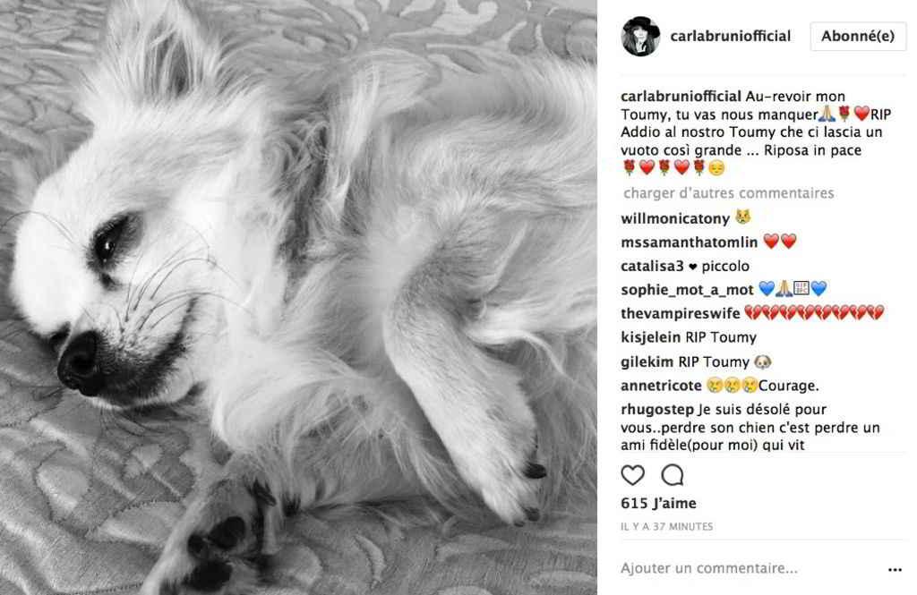 Toumy le chihuahua de Carla Bruni