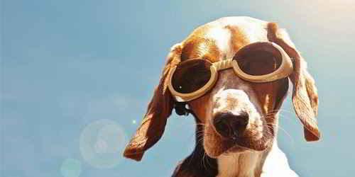 Lunettes pour chiens