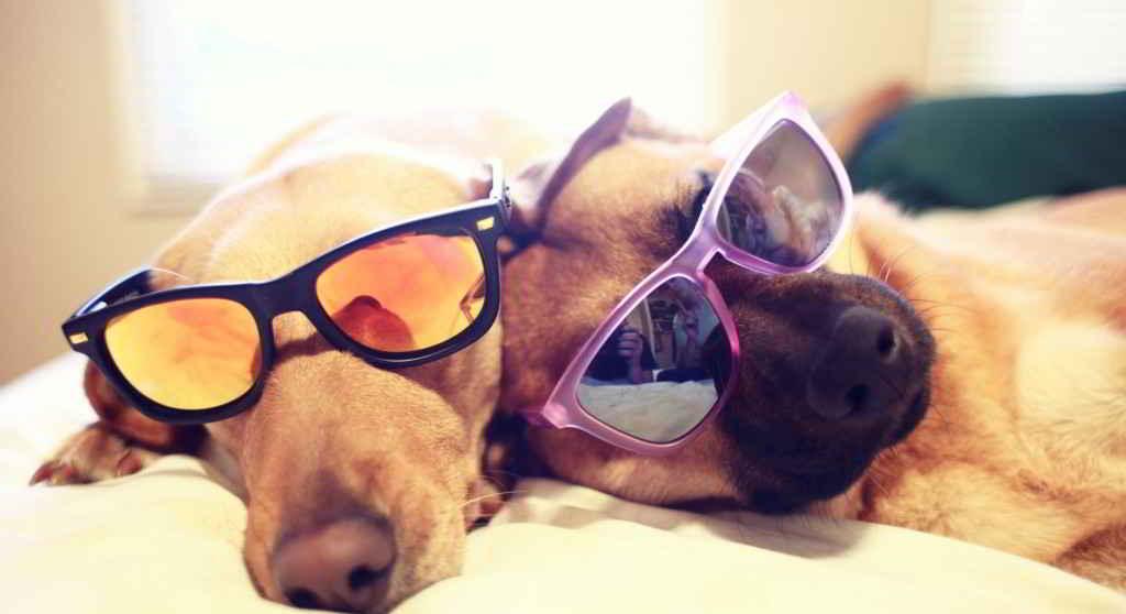 chiens au soleil