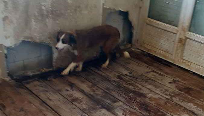 les chiens dans le sous-sol