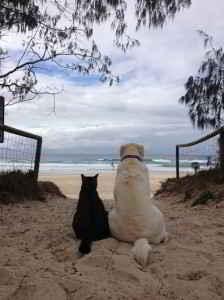 chien et chat en vacances