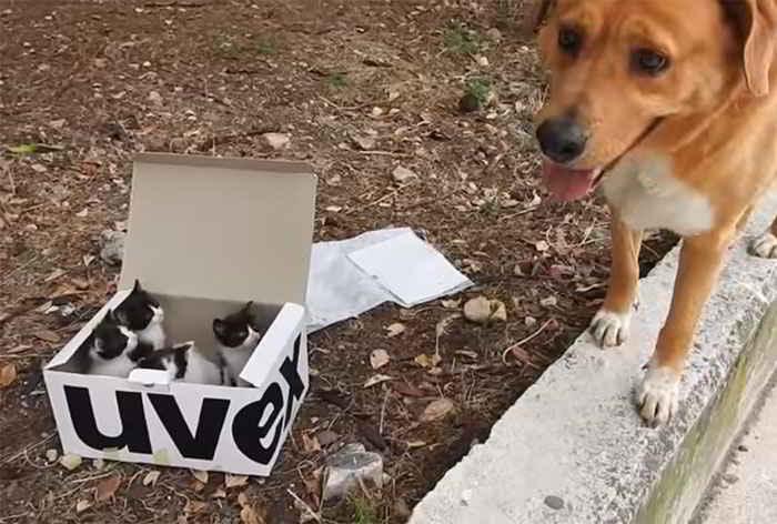 Aragon le chien et les chatons sauvés