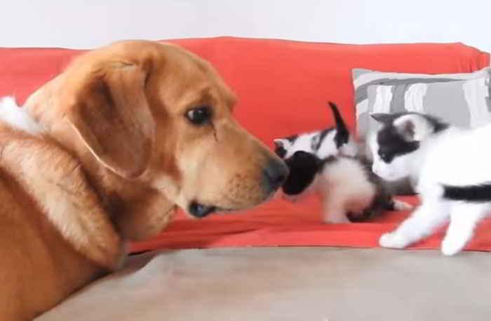 Aragon et les chatons