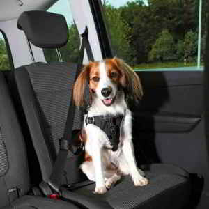 harnais-voiture-dog-protect
