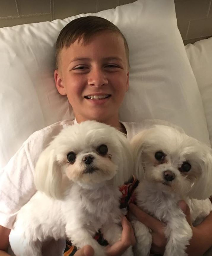 Jack et ses petits chiens Shih Tzu