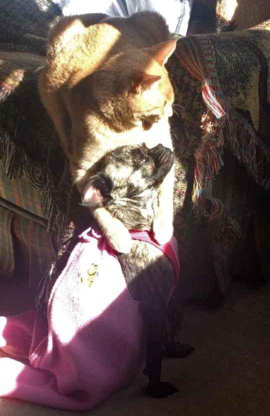 Mowgli et Scarlett