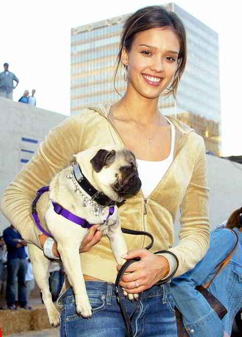 Jessica Alba et son carlin Sid