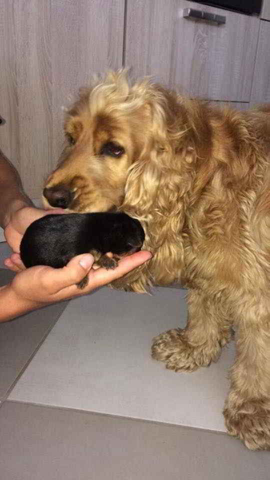 Lucky et sa nouvelle famille