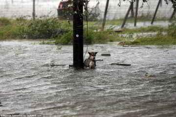Un chien abandonné durant la tempête Harvey