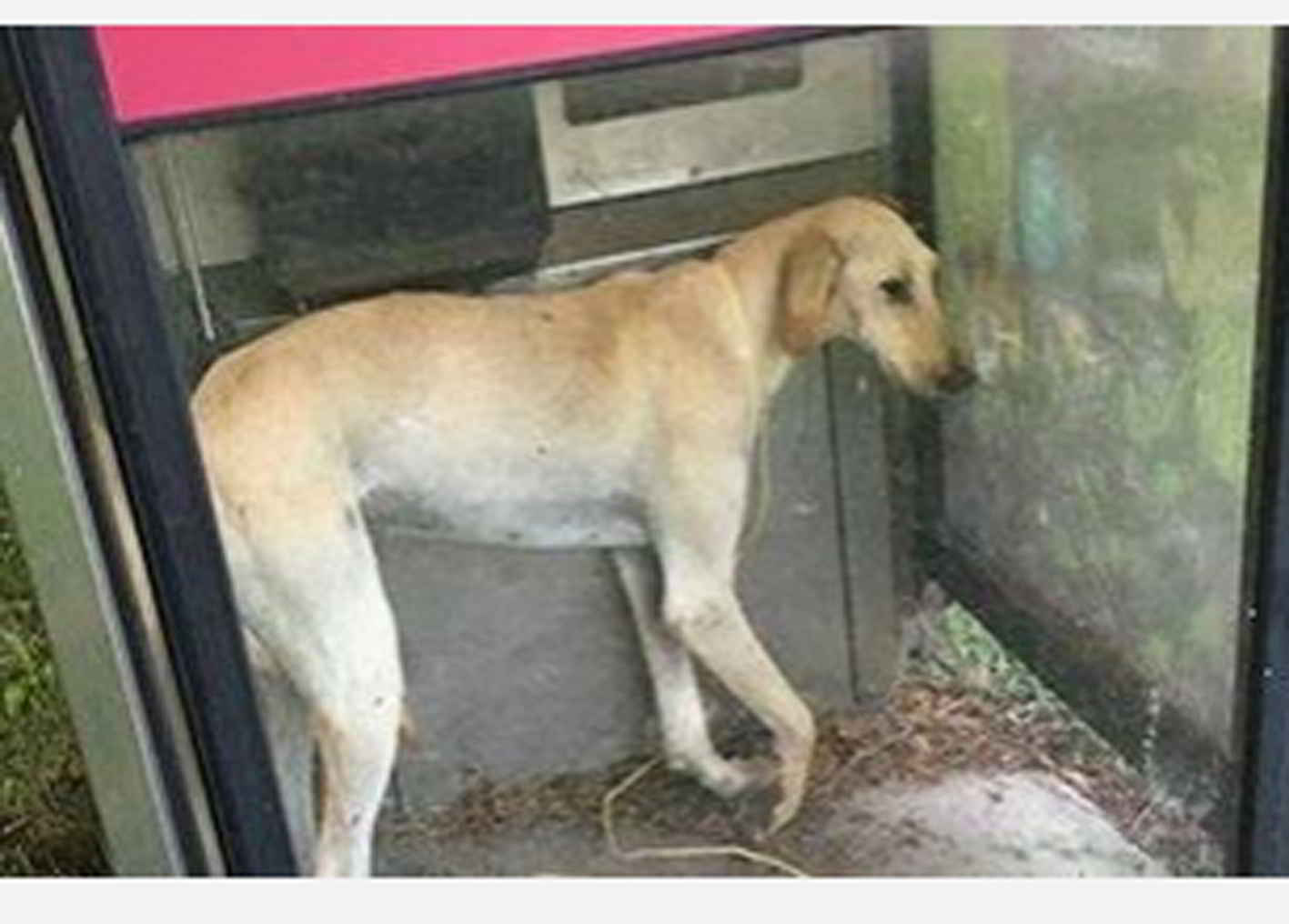 Barry le chien abandonné dans une cabine