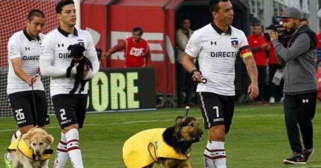 L'équipe de foot de Colo-Colo et les chiens