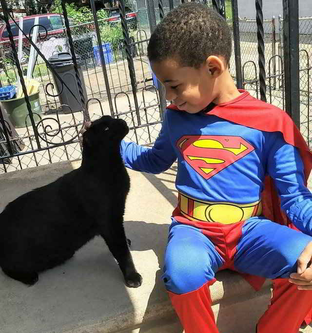 Shon le petit super-héros des chats