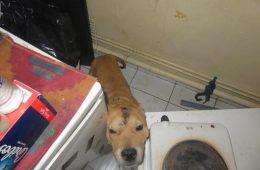 Le chien sauvé par la Fondation Assistance aux Animaux