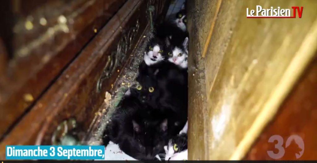 130 chat dans un studio / Photo Le Parisien et 30 Millions d'Amis