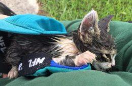 Le petit chaton est sauvé