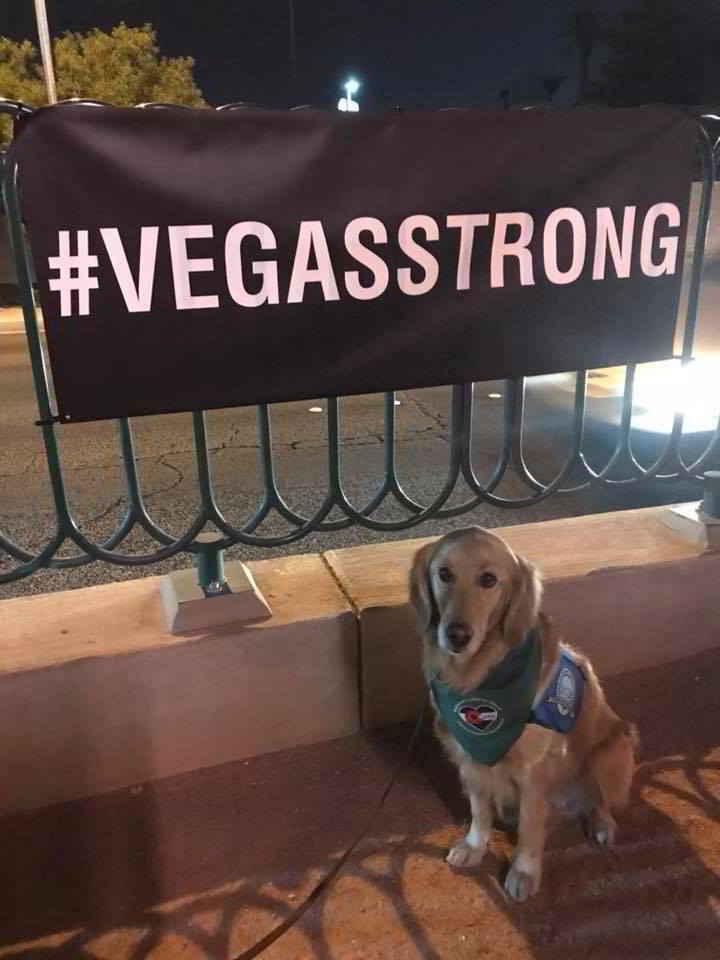 Les chiens de thérapie à Las Vegas