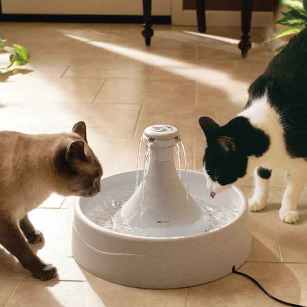 fontaine-drinkwell-360-chiens-chats