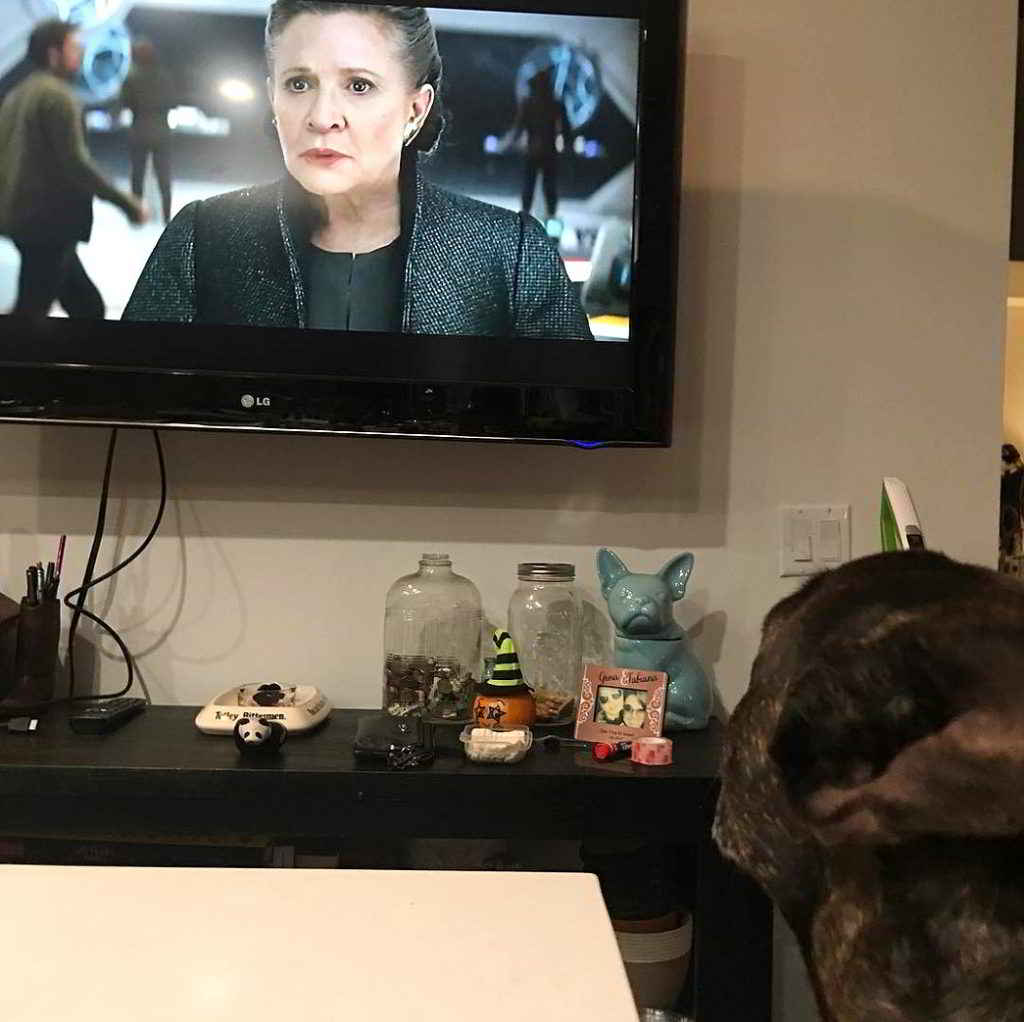 Gary le chien de Carrie Fisher