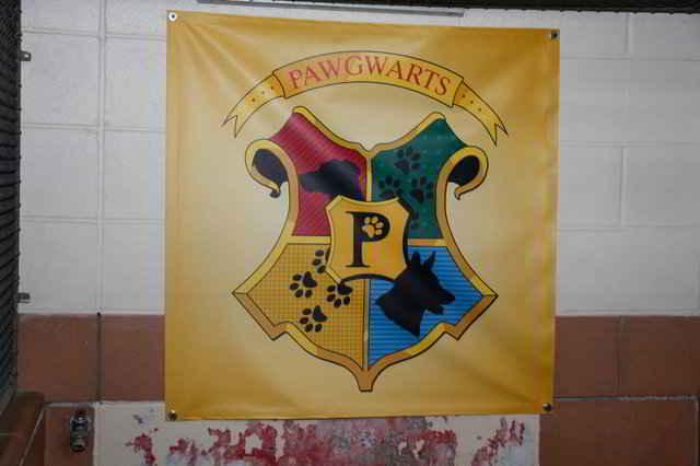 Pawgwarts, le Poudlard des chiens