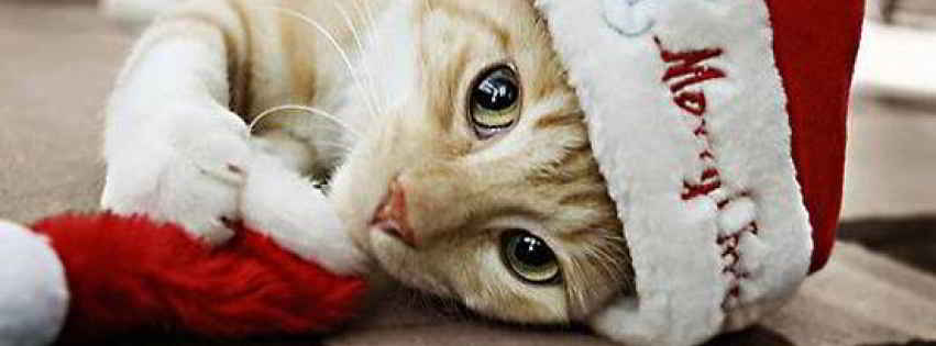 Noël pour chats